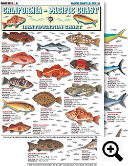 Saltwater Fishing Charts and Saltwater Fish Identification ...